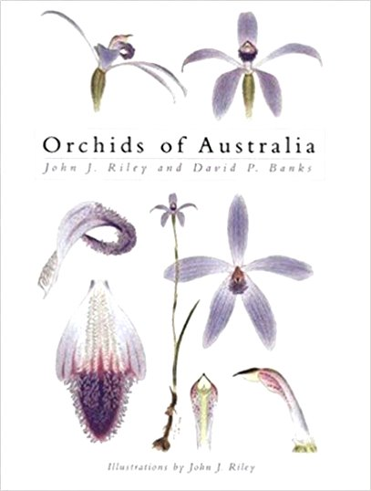 Image for Orchids of Australia